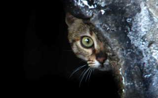 Кот который не боится пылесоса