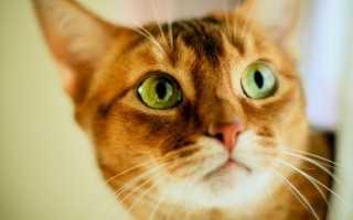 Что видят кошки в телевизоре
